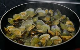 Clams very delicious food from spain. Exquisite and very nutritive crustacean royalty free stock photos