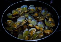 Clams very delicious food from spain. Exquisite and very nutritive crustacean royalty free stock image