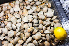 Clams in the Fish Counter of a Restaurant Stock Photos