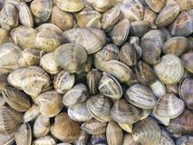 Clams in fish market. Close up of pile of clams on display in fish market royalty free stock photo