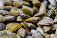 Clams. Fresh bivalve seafood. Clams in a market royalty free stock photos