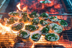 Clams on hot grill Stock Photography
