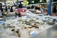Clams in ice at fish market Stock Photos
