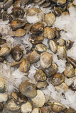 Clams on ice for sale in farmers market Stock Photo