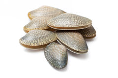 Clams isolated on white background Stock Photo