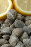 Clams and lemons. Group of clams and lemons raw Royalty Free Stock Photo