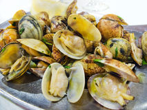 Clams mariniere style. Stock Image