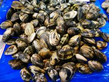 Clams in market Royalty Free Stock Photos