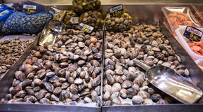 Clams at marketplace Stock Images