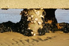 Clams, mussels and Adriatic Sea, Jesolo stock image