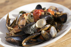 Clams and mussels Royalty Free Stock Image