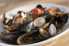 Clams and mussels Royalty Free Stock Images