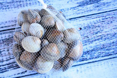 Clams netted bag Stock Photo