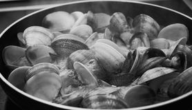 Clams in the north of spain royalty free stock photos