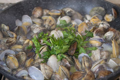 Clams in pan Royalty Free Stock Photos