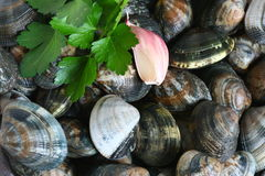 Clams with parsley and garlic Royalty Free Stock Images