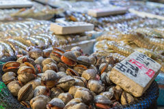 Clams for sale at the Noryangjin Fish Market in Seoul Stock Images