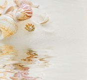 Clams  on sea sand reflected in the water. Several clams  on the background of sea sand reflected in the water surface with small waves Stock Photo