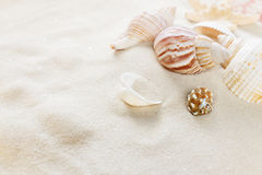Clams on the sea sand. Several clams  on the background of sea sand Royalty Free Stock Images