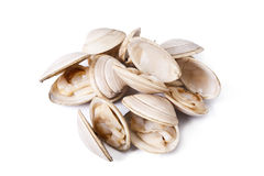 Clams, seafood Royalty Free Stock Images