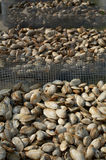 Clams At Seafood Market Stock Photo