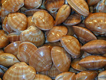 Clams. Seafood clams ready to eat Stock Photo