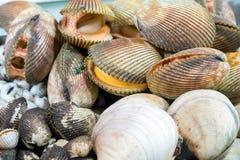 Clams Seafood shellfish Stock Photos