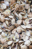 Clams series 01 Royalty Free Stock Photography