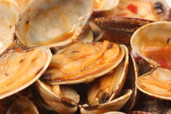 Clams Shell in Chili Paste Royalty Free Stock Image