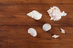 Clams Shells on wood Stock Images
