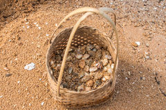 Clams small shell in basket placed. Royalty Free Stock Photo