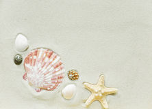 Clams and starfish on a sea sand Royalty Free Stock Photo