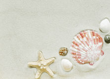 Clams and starfish on a sea sand Royalty Free Stock Image