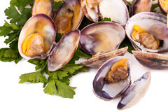 Clams Stewed Royalty Free Stock Photo