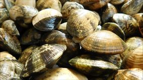 Clams texture. In the kitchen stock video