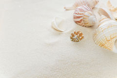 Clams on thesea sand Royalty Free Stock Image