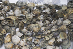 Clams to clean in water Stock Photos