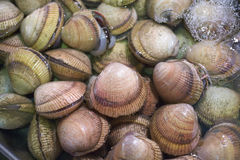 Clams in Water Stock Photos