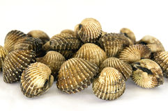 Clams on a white background Royalty Free Stock Photos