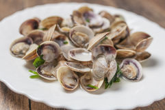 Clams Stock Image