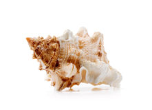 Clamshell isolated Stock Photography