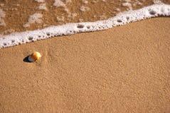 Clamshell på solig strand arkivbild