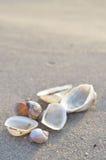 Clamshell on sunny beach Stock Photos