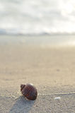 Clamshell on sunny beach Royalty Free Stock Images