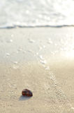 Clamshell on sunny beach Stock Images