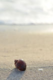 Clamshell on sunny beach Royalty Free Stock Photography