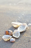 Clamshell on sunny beach Royalty Free Stock Photos