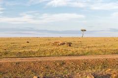 Clan de hienas en sabana en África Foto de archivo