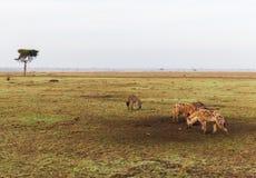 Clan de hienas en sabana en África Imágenes de archivo libres de regalías