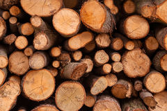 Clannish young fresh cut arranged firewood timber lumber Stock Photo
